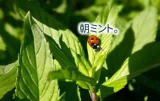 ladybug-1560298_1280
