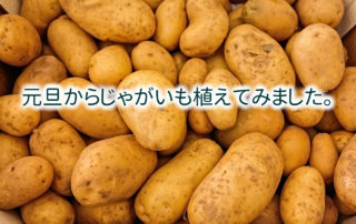 potatoes-411975_1280