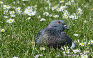 bird-2309908_1280_加工