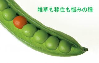 peas-580333_1280
