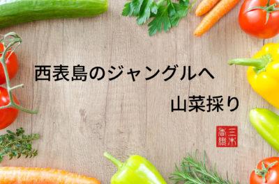 20180119_三木香織_西表島のジャングルへ山菜採り_00