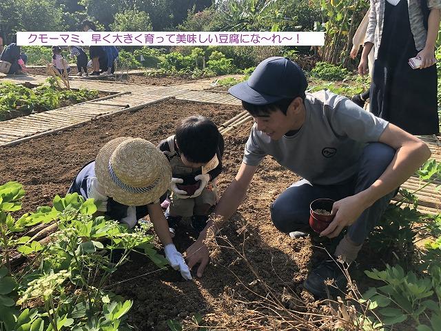 クモーマミ、早く大きく育って美味しい豆腐にな~れ~!